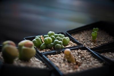 Verschiedene Pflanzen …