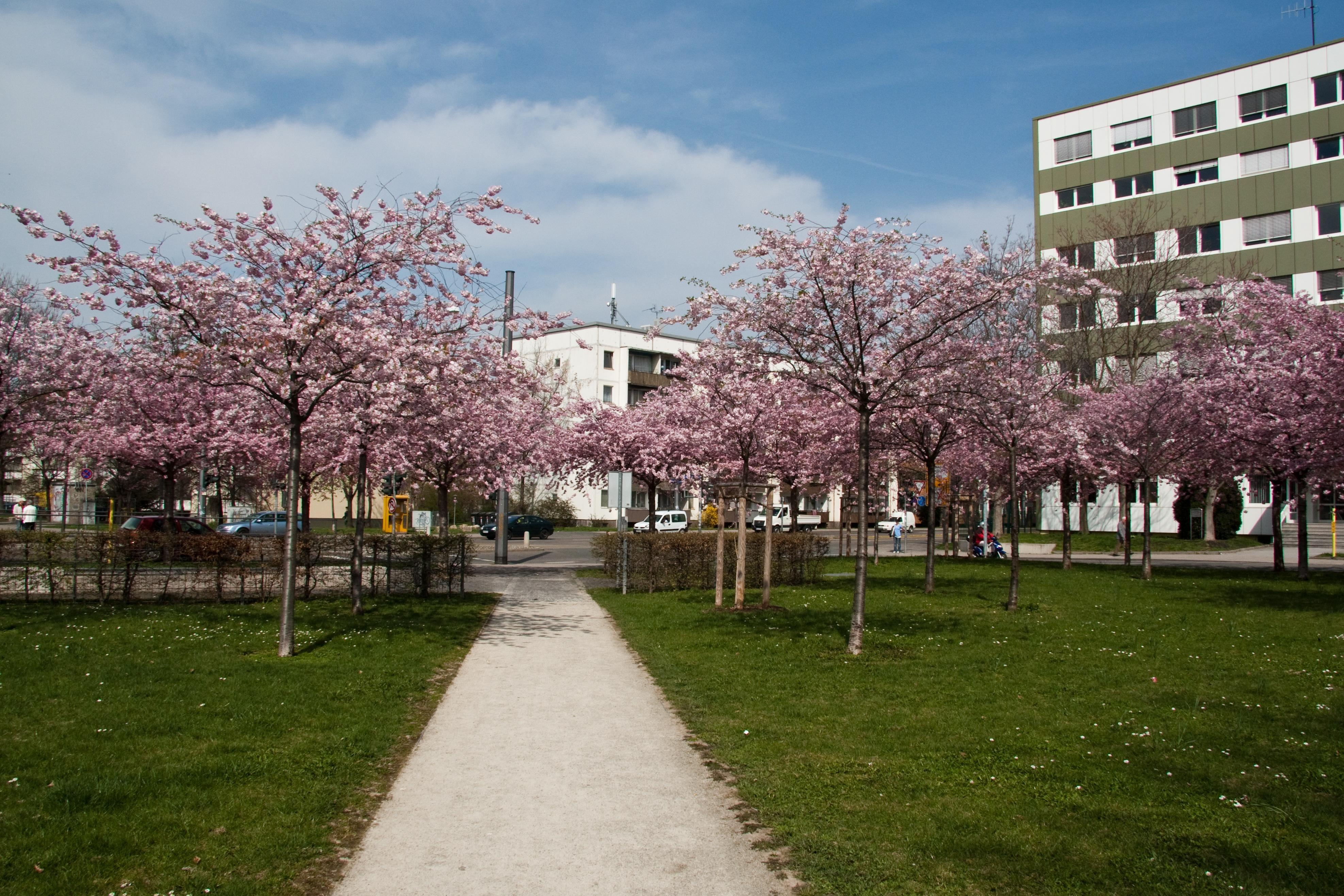 Hanseplatz in Erfurt